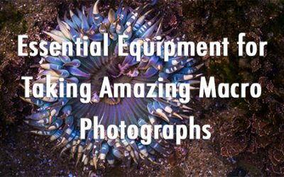 3C Podcast 18 - Essential Equipment for Taking Amazing Macro Photographs