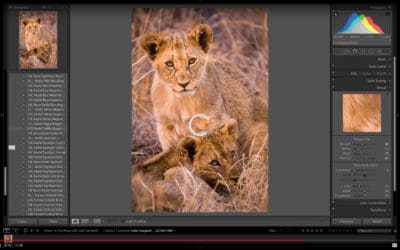 Full Wildlife Processing Workflow with Lightroom