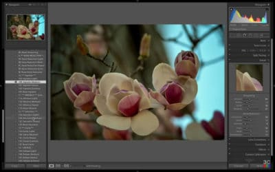 How to Enhance the Main Subject in Lightroom