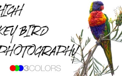 3C Podcast 30 – High Key Bird Photography with Nerrel Loader